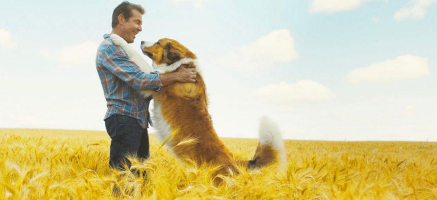 A Dog's Journey: an un-fur-getable tail
